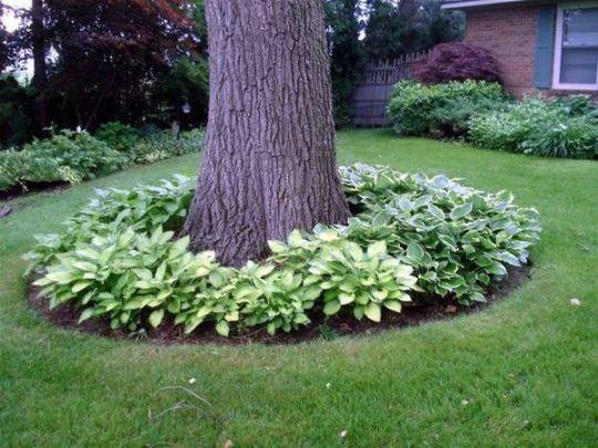 viragok-amelyek-szeretik-az-arnyekot5