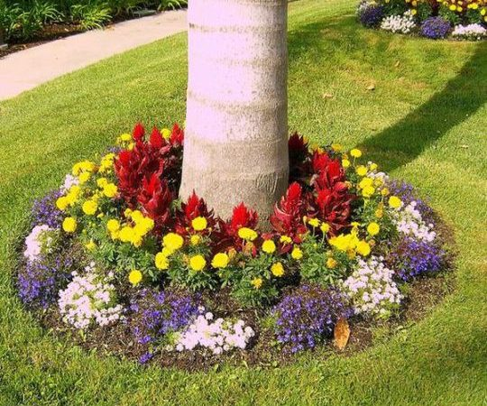 viragok-amelyek-szeretik-az-arnyekot9-540x450