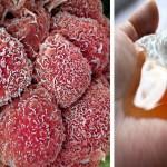 Újabb felfedezés a rákos sejtek legyőzésére! Gyógyító egyveleget képezhet ez a két összetevő