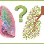 Tüdőnk az egyik legfontosabb szervünk, nem árt, ha ezeket ismerjük! 10 természetes módja tüdőnk tisztításának