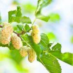Ez a növény mindenhol megtalálható, mégsem tudtam, hogy daganatos betegségekre, a cukorbetegségre és a magas vérnyomásra is kedvező hatással van