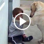 Egy sérült kisfiú közeledik a kutyához, a kutya reakciója mindenkit meglepett!