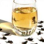 Ezekkel a módszerekkel megszabadulhatsz a legyektől és a szúnyogoktól!