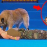 A fiatal nő összeesett a verseny közepén, de kutyája reakciója mindenkit ledöbbentett