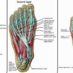 5 lábgyakorlat, amely csökkenti a csípő, a térd és a hátfájdalmakat