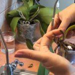 Elszáradtak, elrohadtak az orchideáid gyökerei? Sárgulnak a levelei? Így mentsd meg