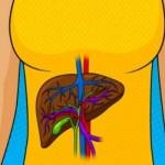 Májbetegséggel kapcsolatos 7 jel, amellyel a tested üzenni próbál