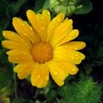 Svaki cvijet treba i sunce i kišu