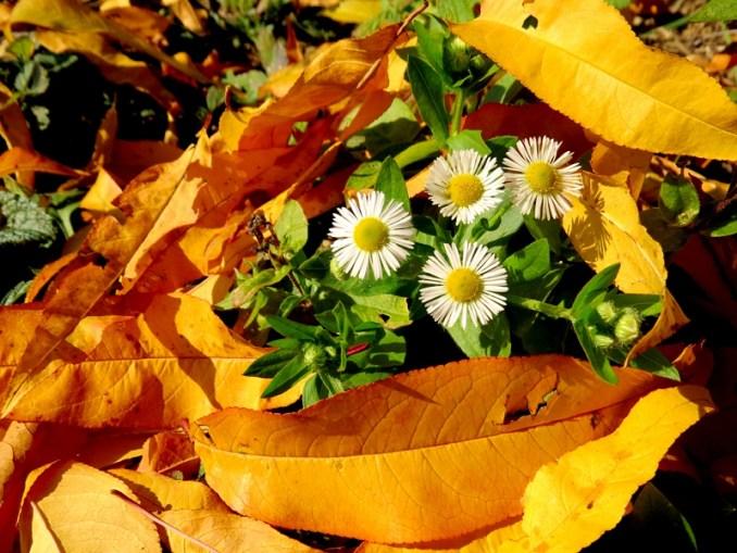 cvijeceuliscu