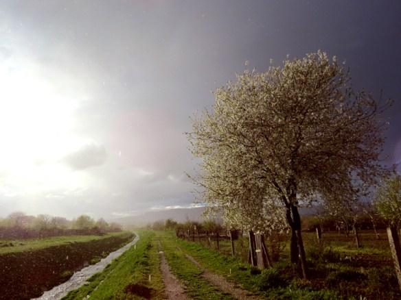 proljece.jpg