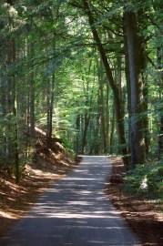 Und noch einmal geht es aufwärts, durch den Wald am Südhang des Hüggel