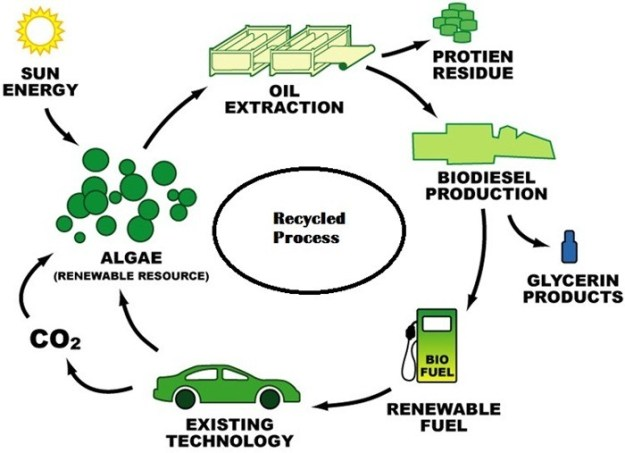 Biodiesel | Transesterification Reaction | Biodiesel Materials | Biodiesel Feedstock's | Biodiesel Blends