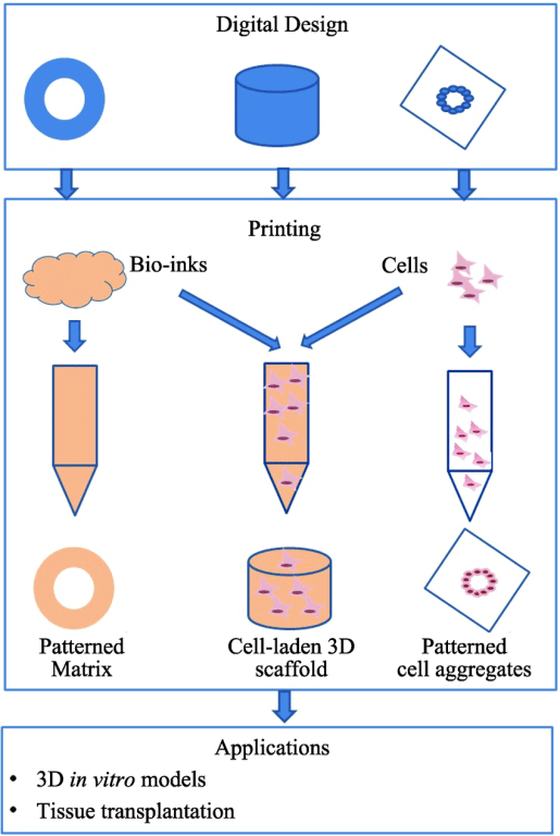 3D-bioprintng-medical-devices-3D-Bioprinting-Organs