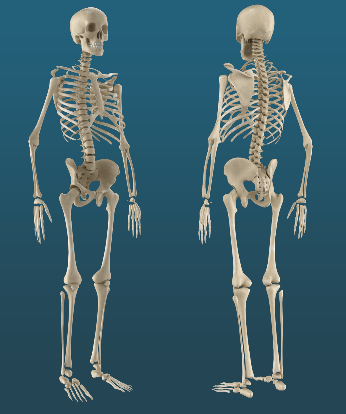 Functions And Anatomy Of Human Body