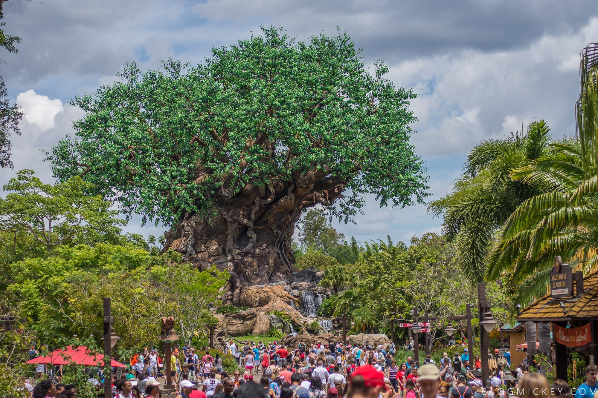 Animal Kingdom Stroller Parking Pilot Begins June 1st   Blog Mickey Animal Kingdom Stroller Parking Pilot Begins June 1st