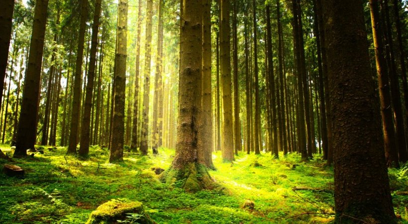 How Lifestyle Affects Your Environment