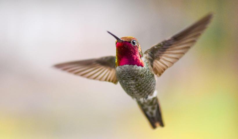Spiritual and Symbolic meaning of hummingbirds!