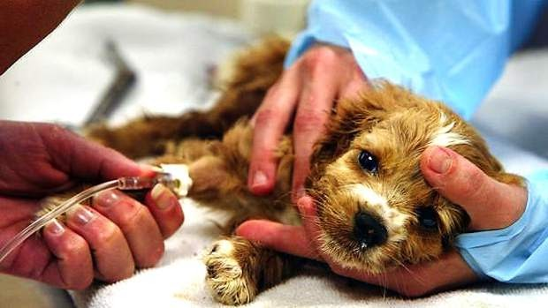 pet vaccinations in Cork