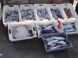 Несебр. На рыбном рынке.