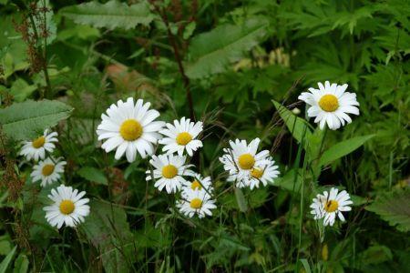 Цветение в окрестностях Южно-Сахалинска