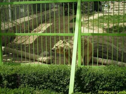 خرسها حیوانات بامزه و در عین حال خشمگینی بودند