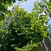 Green Renovation | Nhà ở Hà Nội - Võ Trọng Nghĩa Architects