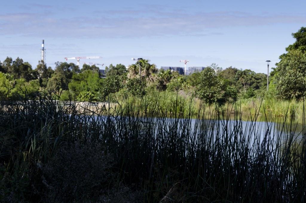 Sydney Park, cranes