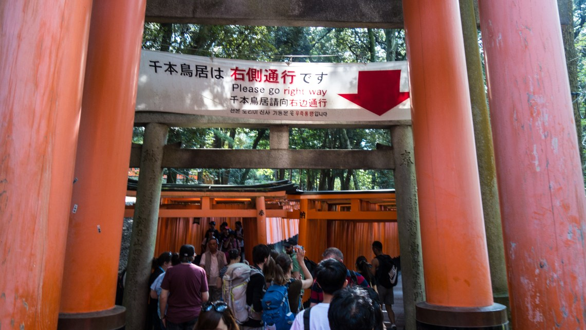 Tourists at torii gates