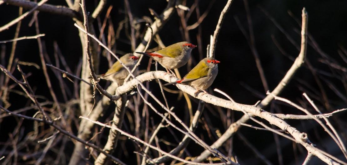 My Sunday Photo Tiny Birds