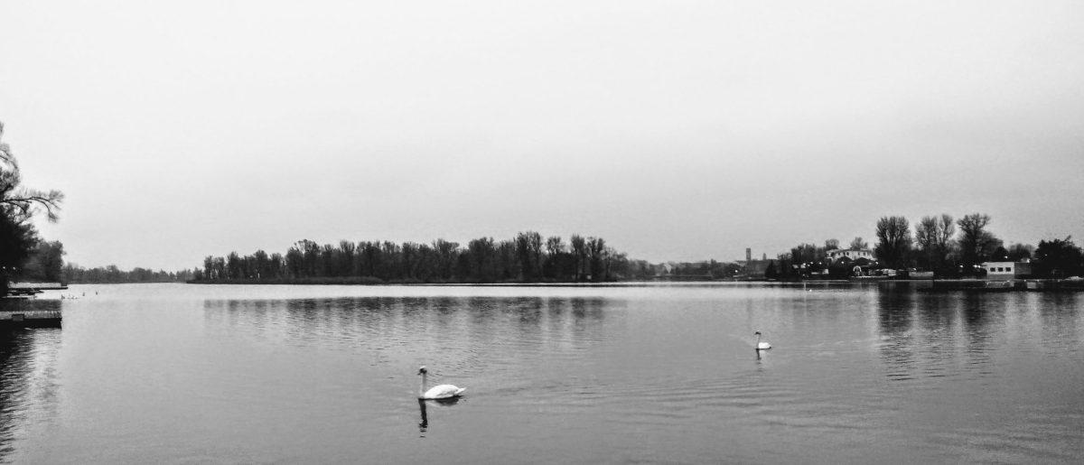 An der unteren alten Donau