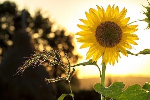 flower definition