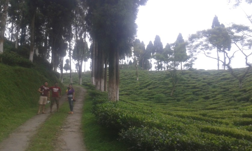 Going up a tea garden while going back. This little upslope also hurts!