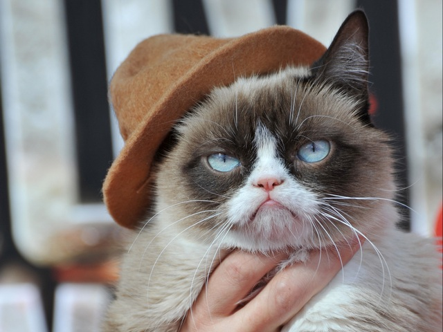 chapeau-chat-grognon