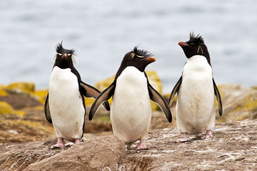A Marine Diet What Do Penguins Eat