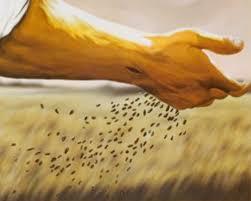 parabola semeador semente - Que tipo de solo eu sou? – A Parábola do Semeador