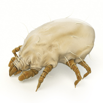 10 Ways To Control Allergen Causing Dust Mites Pest