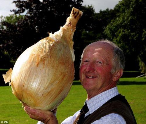 世界最重洋蔥