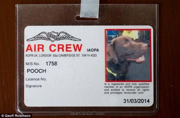 卡利是第一隻獲頒「機組人員卡」的狗