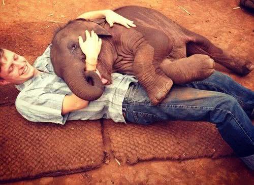 泰國黏人小象