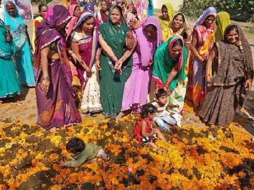 印度小孩被推入牛糞堆中