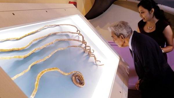 奇拉爾 (Shridhar Chillal) 是擁有全世界最長指甲的男人