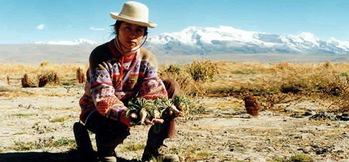 maca-peruana-como-estimulante-sexual