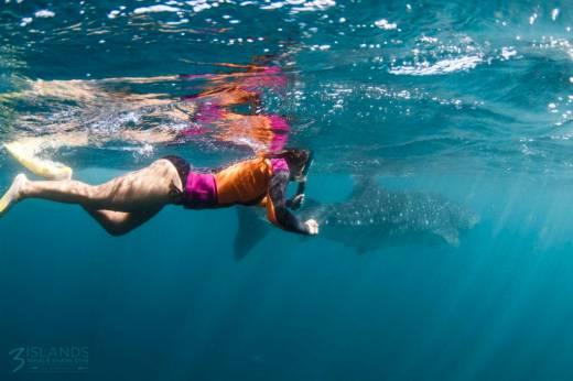 3islands Whale Shark