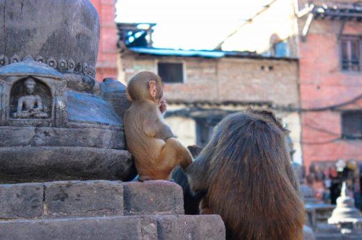Swayambhunath, Monkey temple Nepal