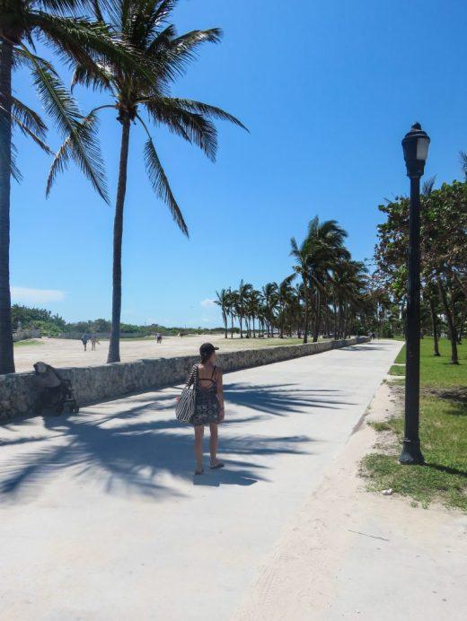 south beach Miami, palm trees