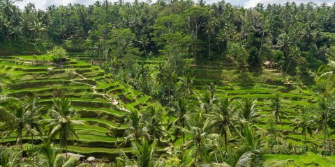 Full Day Excursion in Bali