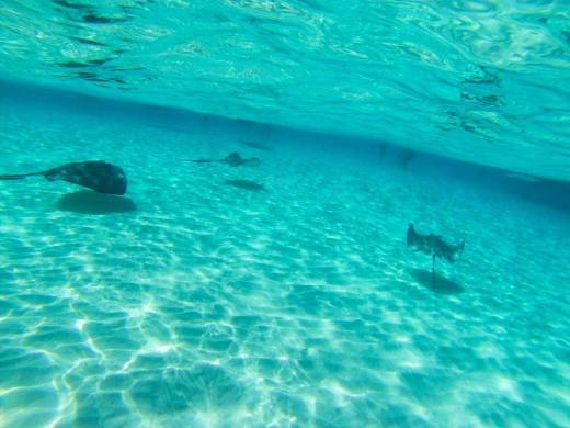 Stingray City, Grand Cayman, Cayman Islands