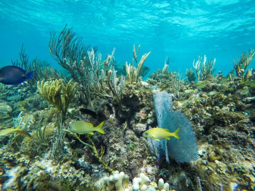 Coral Gardens snorkelling Grand Cayman