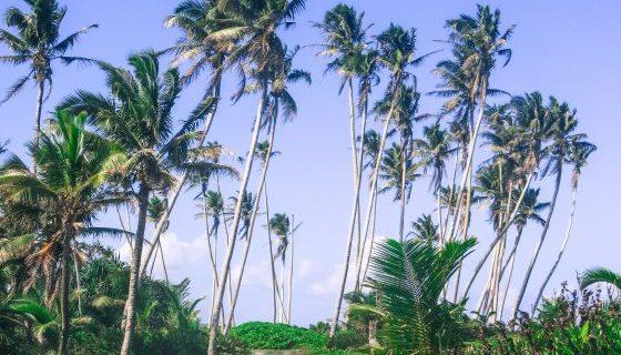 My Samoa Guide