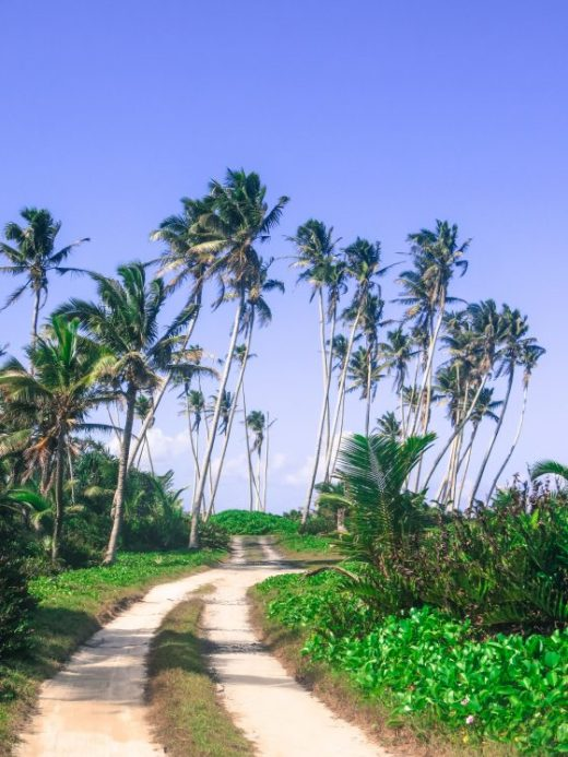 Samoa road